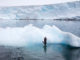 Holger Leue hält den richtigen Moment fest: Ein Zügelpinguin springt von einem Eisberg; Foto: Holger Leue