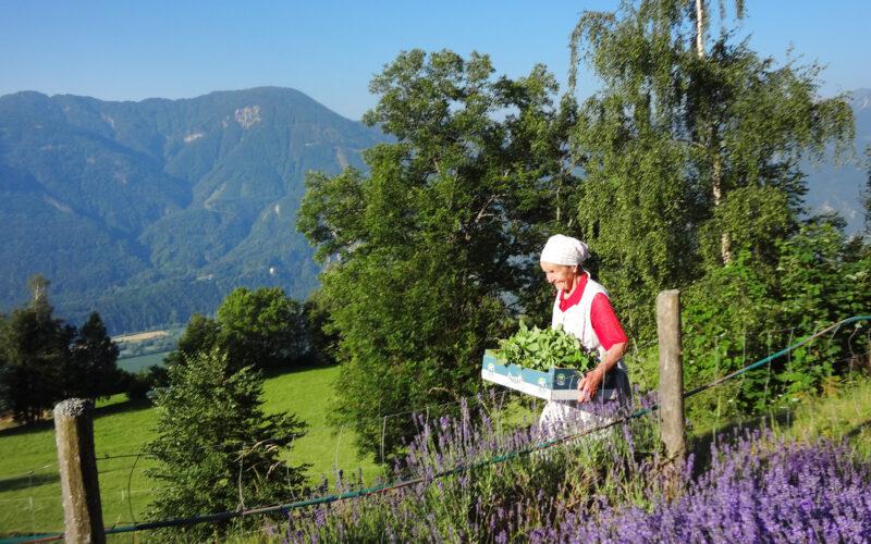 Eine Bergbäuerin auf dem Hof von Rosi Kranebitter im Kräuterdorf Irischen, Kärnten. (Foto: Charis Stank)